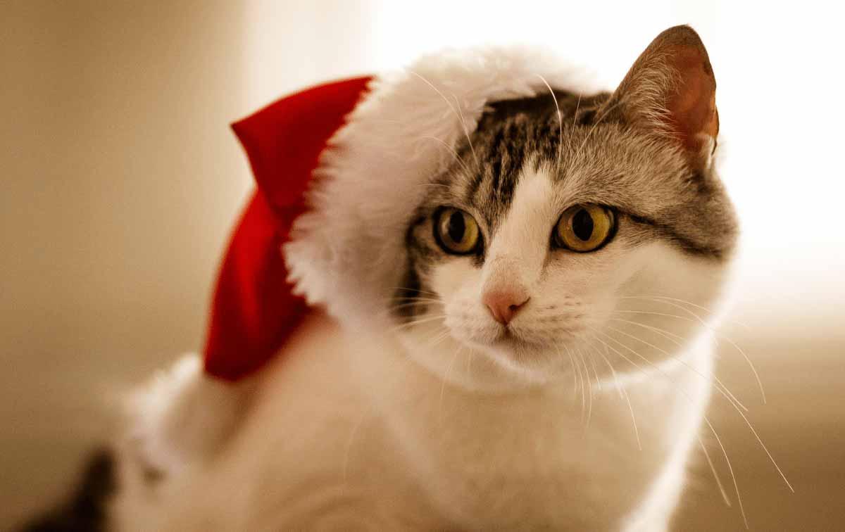 Marketing en Navidad: consejos para tus campañas